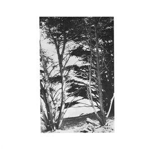 Gentle Wilderness