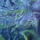Algae Bloom (Photo Essay)