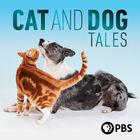 NOVA, Season 47, Episode 3, Cat Tales