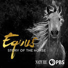Nature: Equus: Story of the Horse, Episode 2, Chasing the Wind