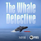 Nature, Season 38, Episode 9, The Whale Detective