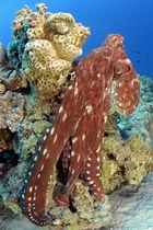 Blue Planet II, 3, Coral Reefs