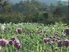 The Golden Triangle: Forbidden Land of Opium