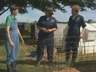 Bovine Series, Calves Facilities