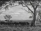 The Australian Experience, 1995, Populate or Perish