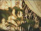 Florestabilidade, Episódio 11, Manejo de Produtos Florestais não Madeireiros: Babaçú