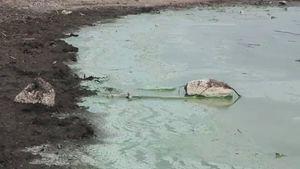 Cyanobacteria bloom in a lake