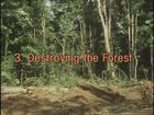 Landmarks: Tropical Rain Forests, Episode 3, Destroying the Forest