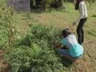 Molokai Mom - Standing up to GMO