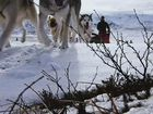 Great Big Story, The Sled Dogs of Denali