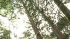 Kenya At 50: Environment, Wildlife, and Culture
